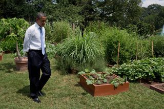 O in kitchen garden (Souza)