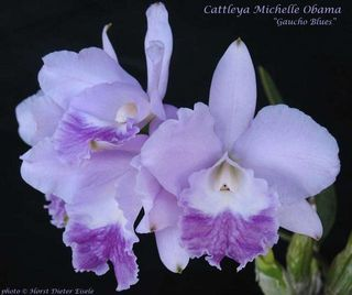 M orchid