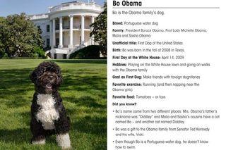 Bo-obama-dog