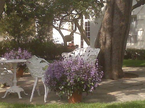 Jackie Kennedy WH garden